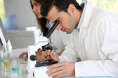 Doctor in biology working on microscope — Stock Photo