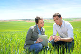 Agronomist looking at wheat quality with farmer — Stock Photo