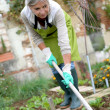 Woman cultivating vegetable garden — Stock Photo