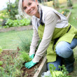 Senior woman planting herbs — Stock Photo #35320369