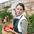 Womholding basket of tomatoes — Stock Photo #35325981
