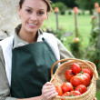 Womholding basket of tomatoes — Stock Photo #35326015