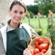 Womholding basket of tomatoes — Stock Photo #35326047