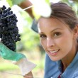 Woman picking grape — Stock Photo