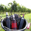 Bucket with wine bottles in vineyard — Stock Photo