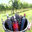 Bucket with wine bottles in vineyard — Foto Stock