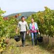 Winegrowers walking in vineyard — Stock Photo #35332295