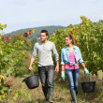 Winegrowers walking in vineyard — Stock Photo #35332301