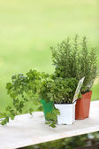 Aromatic plants set on table — Stock Photo