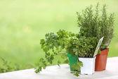 Aromatic plants set on table — Stock Photo