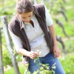 Woman working in vineyard — Stock Photo