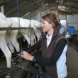 Breeder ready for goat milking — Stock Photo #47779199