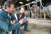 Veterinarian with breeder checking on herd — Stock Photo