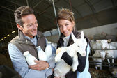Couple of breeders in barn — Stock Photo