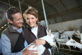Couple carrying baby goat — Stock Photo