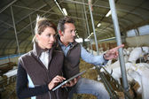 Couple using tablet in barn — Stock Photo