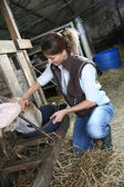 Woman breeder in barn — Stock Photo
