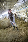 Breeder gathering hay — Stock Photo