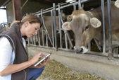 Veterinarian checking on health of herd — Stock Photo
