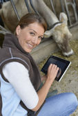 Veterinarian working with tablet — Stock Photo