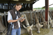Veterinarian using tablet — Stock Photo