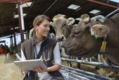 Veterinarian in barn with tablet — Stock Photo