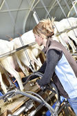 Breeder ready for milking — Stock Photo