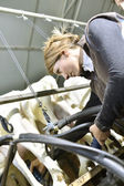 Breeder in barn — Stock Photo