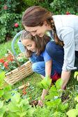 Girl helping mother gardening — Stock Photo