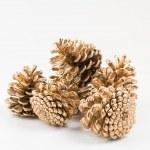Five golden pines cones group — Stock Photo
