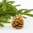 Golden pine cone with conifer — Foto Stock