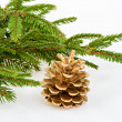 Golden pine cone with conifer — 图库照片