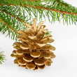 Stock Photo: Golden pine cone with conifer
