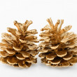 Two golden pine cones — Stock Photo
