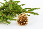 Golden pine cone with conifer — Stok fotoğraf
