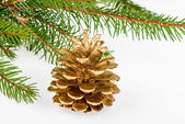 Golden pine cone with conifer — Stock Photo