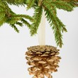 Golden pine cone on conifer branch — ストック写真