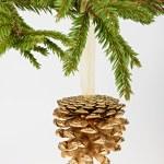 Golden Kieferkegel auf Nadelbaum branch — Stockfoto