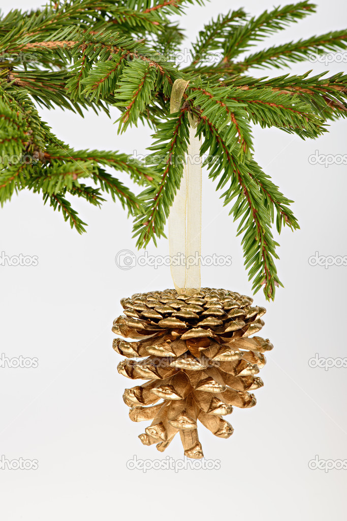 Golden pine cone on conifer branch on white background  Stock Photo #13742217