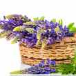 Beautiful lupine bouquet in basket — Stock Photo #26756997