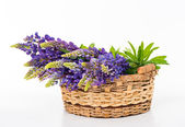 Beautiful lupine bouquet in basket — Stock Photo
