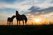 Two horses at sunset — Stock Photo