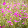 Little pink flowers in green grass — Stock Photo