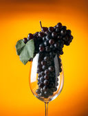 Branch of ripe grapes in a glass of wine — Стоковое фото