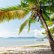 Stock Photo: Perfect thai beach with white sand