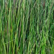 Green grass macro closeup - outdoor — Foto de Stock