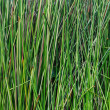 Green grass macro closeup - outdoor — Lizenzfreies Foto