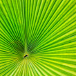 Green palm tree leaf as a background — Foto de Stock