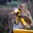 Stock Photo: One funny monkey eats banana