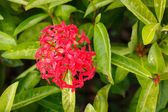 Beautiful exotic bush with flowers — Stock Photo